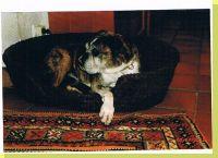 Dark-Lady vom Grossen Ritter Wurftag: 08.09.1999 Zuchtbuchnummer: 216013
