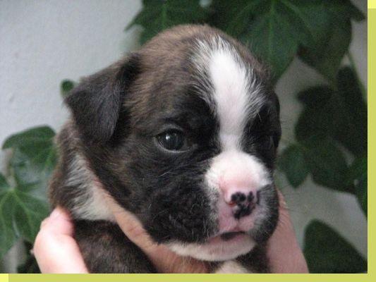 Nizza vom Grossen Ritter geboren: 11.07.2008